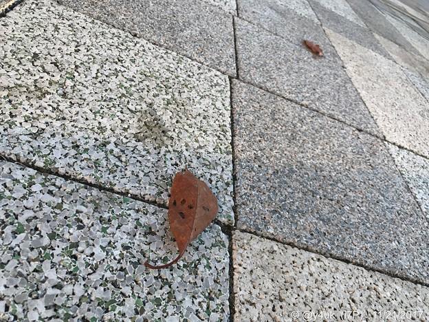 写真: 舞い落ちた落ち葉、離れた2枚~見にい紅葉~autumn in leaves
