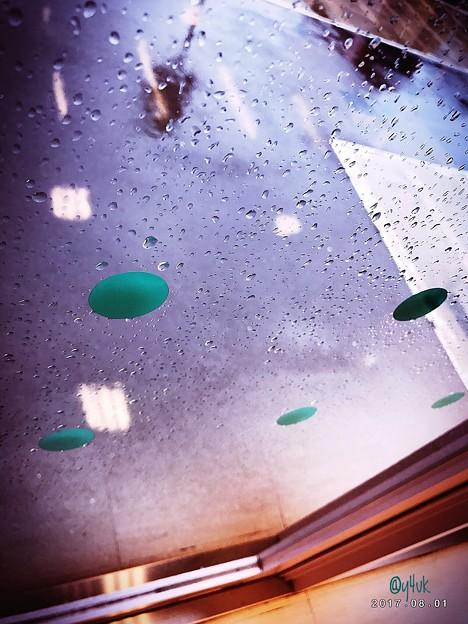 写真: 久しぶりの潤いに濡れて~落ち着き17:50眠れる森の雨~Oh, Rain drop