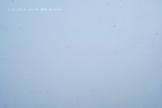 Photos: 10:38 純白な空から舞い降りる天使たち~全てチョコだったならいいのにね~絞り優先Flash
