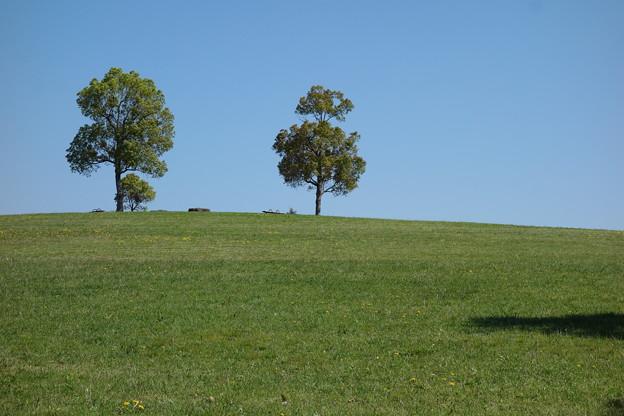 写真: 家族の木