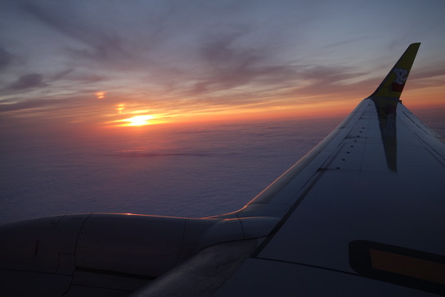 Photos: 夕焼けと翼