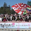 写真: 京都さくらよさこい1