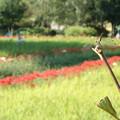 写真: トンボもお花見