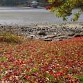 写真: 落ち葉と・・・