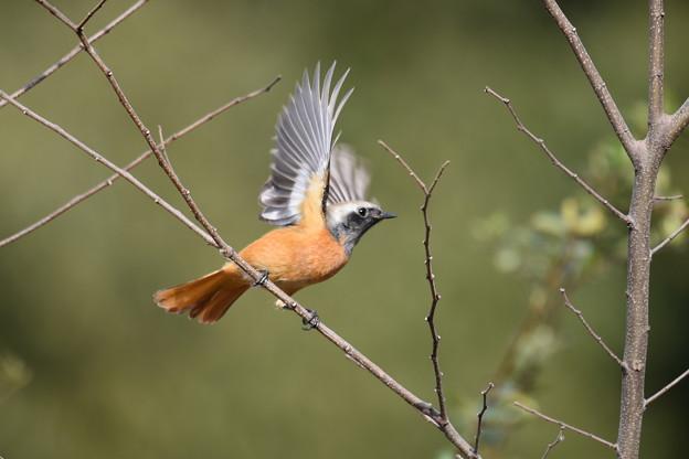 写真: おっとっと鳥