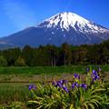 写真: 陽光富士