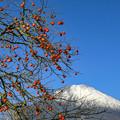 写真: 実りの秋