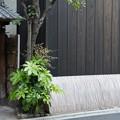 Photos: 京都の裏道、お散歩中