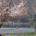 桜と釣り人