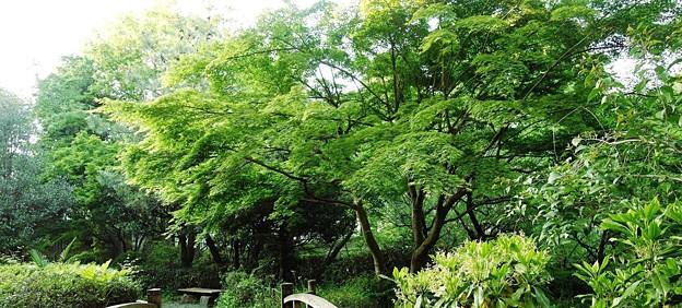 緑道公園 (2)