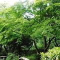 写真: 緑道公園 (2)