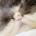 写真: 眠ったらぶ~ちゃん2