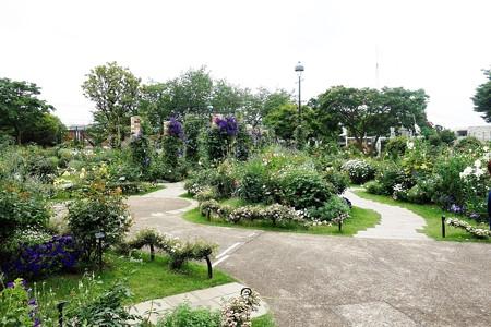 港の見える丘公園 (5)