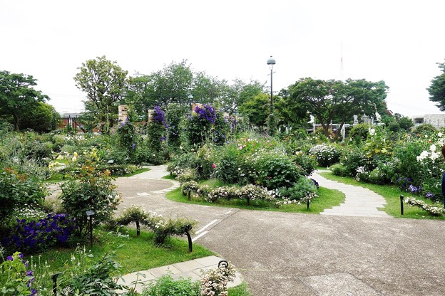 写真: 港の見える丘公園 (5)