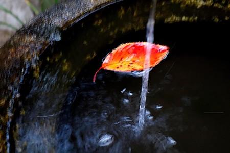 落ち葉と一縷の水