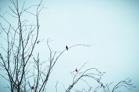 枯木にとまる鳥
