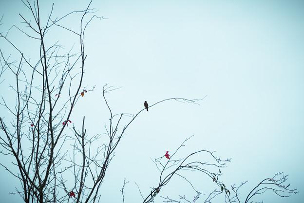 写真: 枯木にとまる鳥