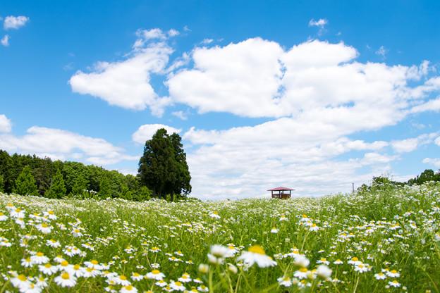 写真: 初夏の香り