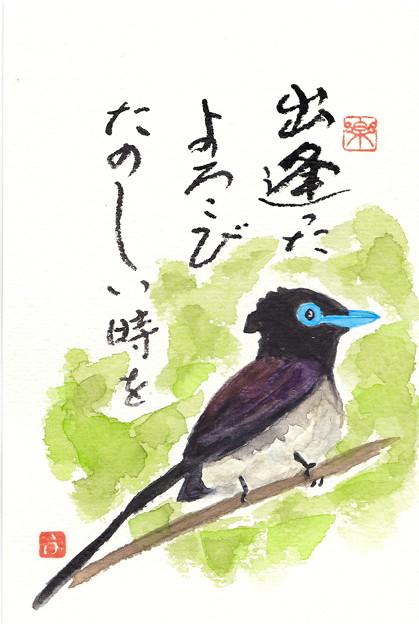 写真: サンコウチョウ by ふうさん