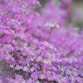 愛の形の花