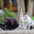 写真: 猫も花見をしに来ます