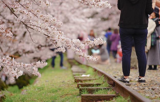 Photos: 蹴上鐵道櫻花