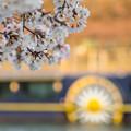 写真: 櫻花河岸