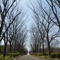 写真: 大道枯枝