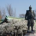 写真: 豊臣秀吉公銅像&桜