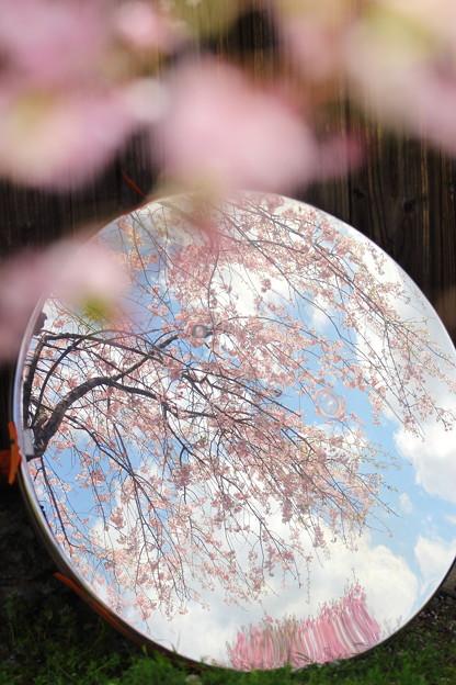 写真: 春ミラー