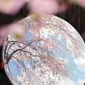 Photos: 春ミラー