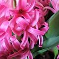 写真: 早春の花
