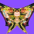 写真: 蝶の言葉-06a(2)