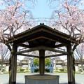 写真: 聖蹟公園(品川宿本陣跡)-02