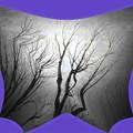 写真: 裸木-01b