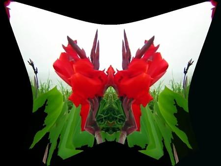 カンナの花-02b