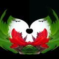 カンナの花-03b
