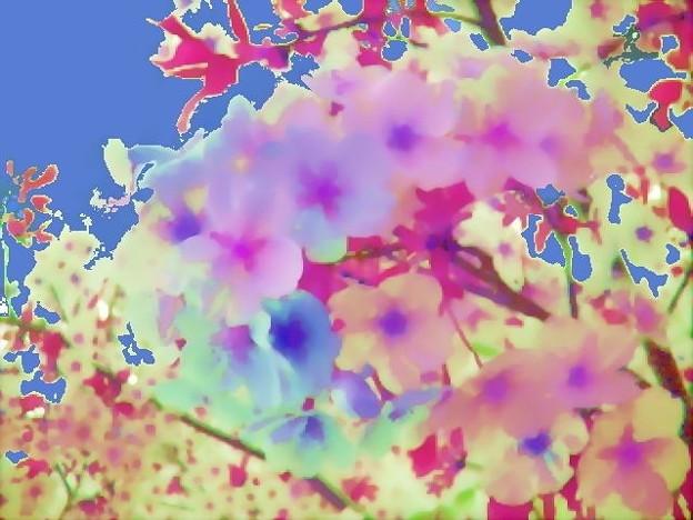 桜花-02