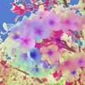 写真: 桜花-02