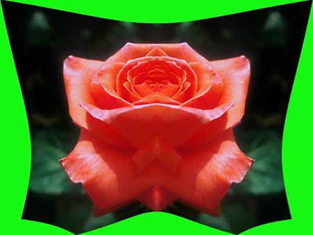 紅い花-02c