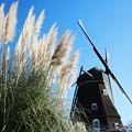 写真: 風車の丘