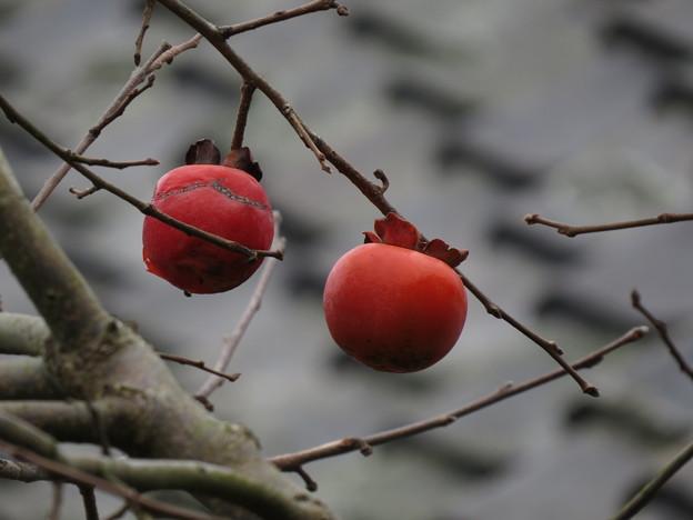 取り残された柿二つ