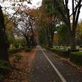 Photos: 立川の紅葉