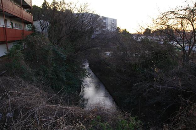 写真: 白子川