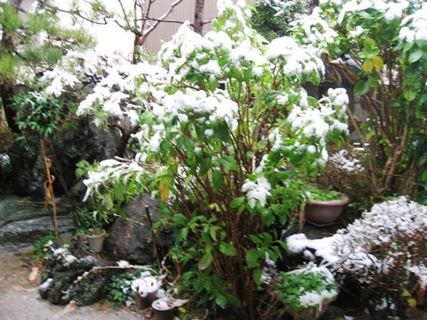 我が家の初雪-1