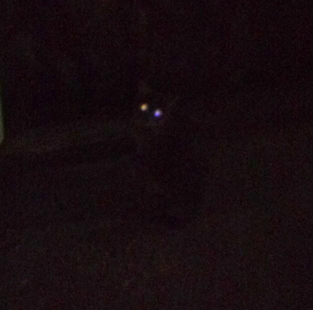 _171027 013 オッドアイの猫って目も二色に光るのかなあ?
