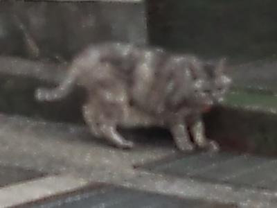 _171027 008 怪奇!腹毛が長い猫