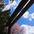 Photos: 鳥居の春