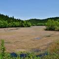 新緑のコケ沼