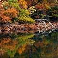 須川湖~枯れ木